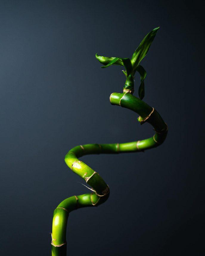 Espirales en Bambu de la Suerte