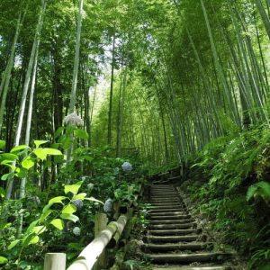 propiedades del bambu bosque